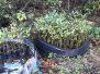 Alligator Head Foundation Mangrove Replanting