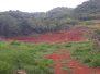 LIFE-Jamaica Greenhouse Growers