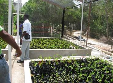 Newly constructed wet nursery at Discovery Bay Marine Lab-1
