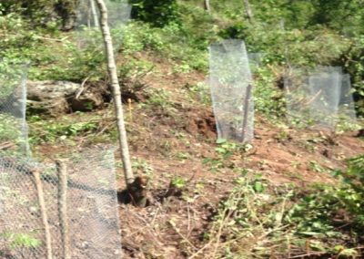 Seedlings planted and pegged all around with mesh as a protective mechanism against small ruminants such as goats