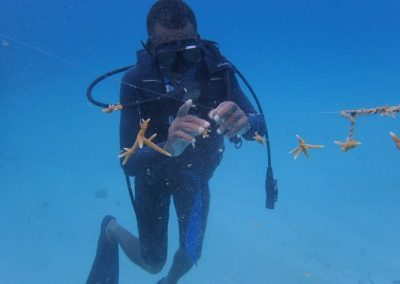 Coral lines being cleaned by two divers1