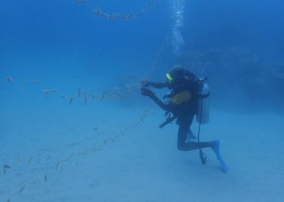 Coral lines being cleaned by two divers2