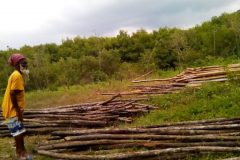 Transporting-logs_1