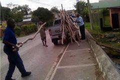 Transporting-logs_2