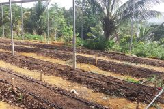 Moneague College - Greenhouse