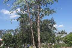 Plant Jamaica- 1 Hopefield Ave